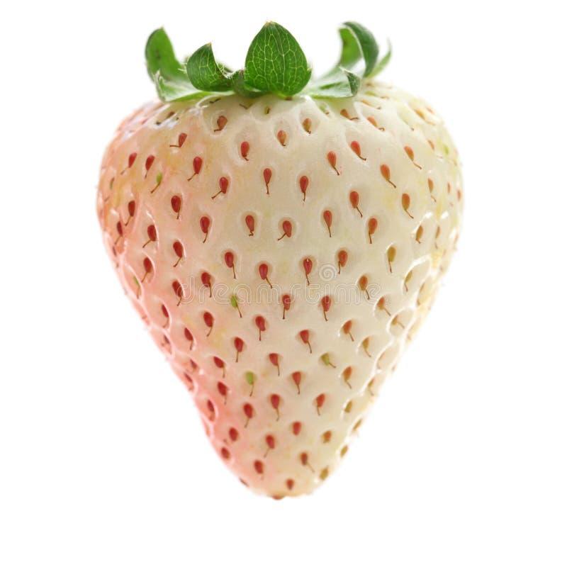 Άσπρη φράουλα στοκ φωτογραφία με δικαίωμα ελεύθερης χρήσης