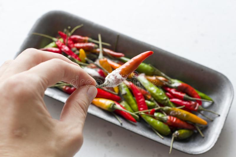 Άσπρη φόρμα στα πορτοκαλιά πιπέρια τσίλι, σε ένα σύγχρονο ανοικτό γκρι υπόβαθρο Χαλασμένα τρόφιμα, λαχανικά Το χέρι κρατά το πιπέ στοκ εικόνα