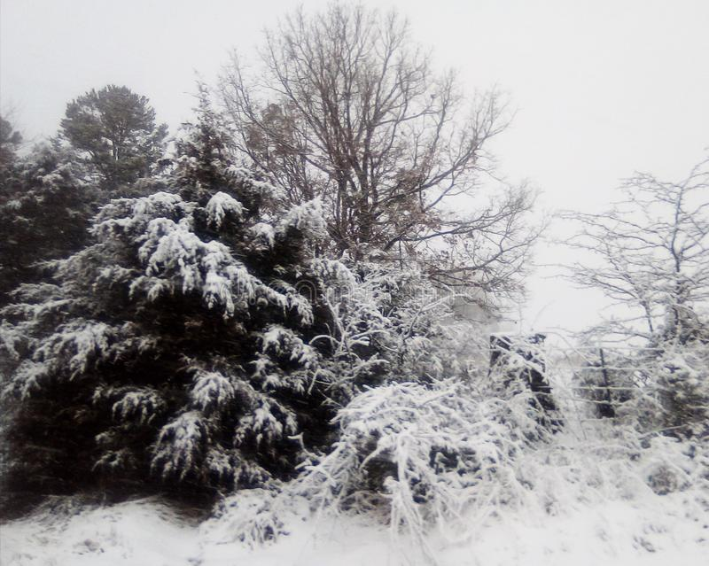 Άσπρη χώρα των θαυμάτων, που καλυεται χειμερινή στο χιόνι στοκ εικόνες