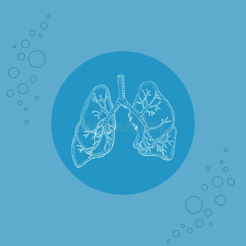 Άσπροι ανθρώπινοι πνεύμονες και βρόγχοι στο υπόστρωμα απεικόνιση αποθεμάτων