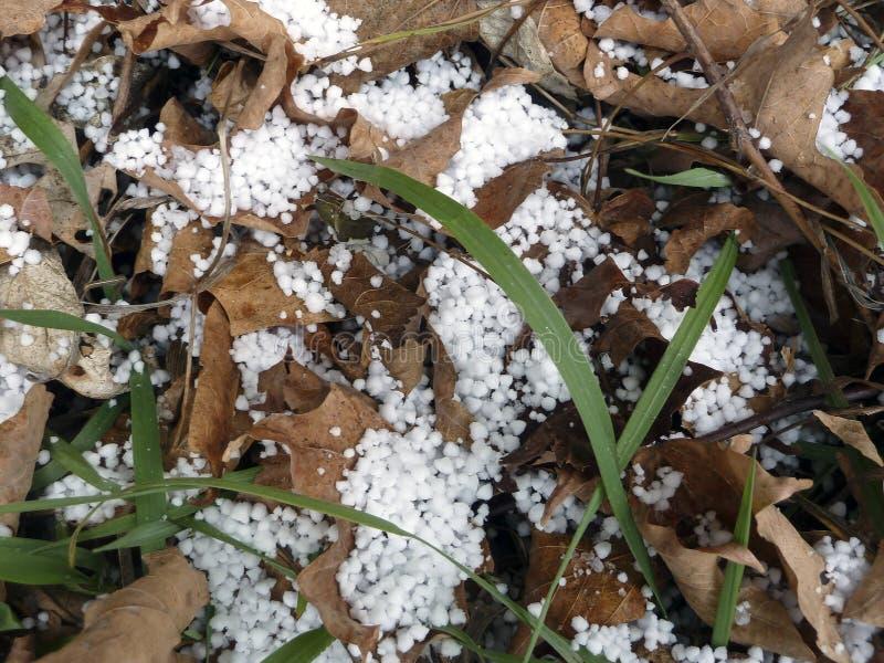 Άσπροι σβόλοι χαλαζιού ή πάγου στα καφετιά φύλλα με την πράσινη λεπίδα χλόης στοκ εικόνες