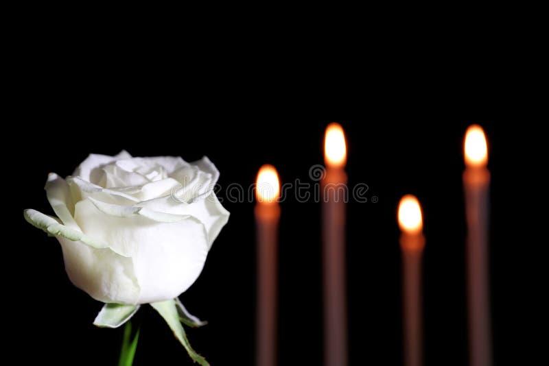 Άσπρος αυξήθηκε και θόλωσε τα καίγοντας κεριά στο σκοτάδι, διάστημα για το κείμενο στοκ εικόνες