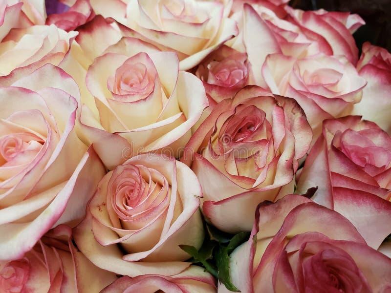 άσπρος αυξήθηκε λουλούδια με την κόκκινη άκρη σε μια floral ανθοδέσμη στοκ εικόνα με δικαίωμα ελεύθερης χρήσης