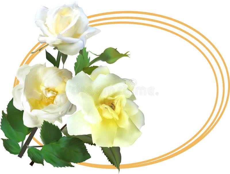 Άσπρος αυξήθηκε λουλούδια στο χρυσό ωοειδές πλαίσιο ελεύθερη απεικόνιση δικαιώματος