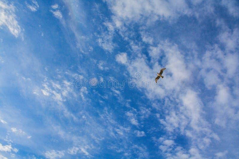 Άσπρος γλάρος σε έναν νεφελώδη μπλε ουρανό στοκ φωτογραφία με δικαίωμα ελεύθερης χρήσης