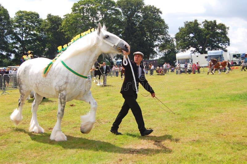 Άσπρος εμφανίστε άλογο στοκ φωτογραφία με δικαίωμα ελεύθερης χρήσης