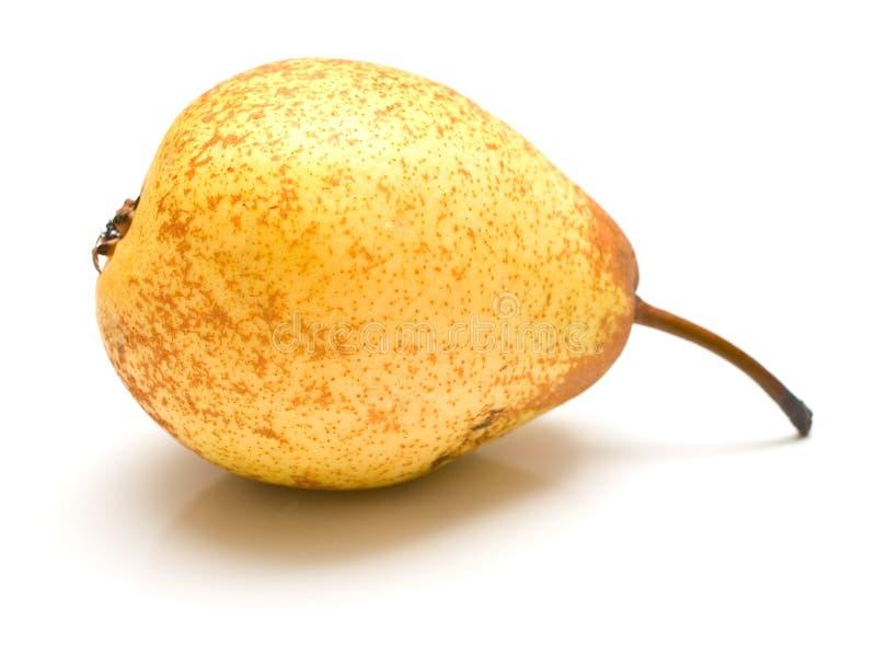 άσπρος κίτρινος αχλαδιών στοκ εικόνα