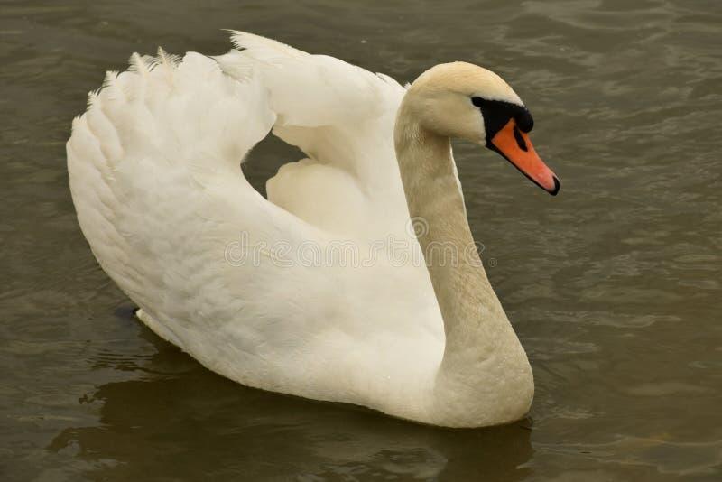 άσπρος και όμορφος στοκ εικόνες με δικαίωμα ελεύθερης χρήσης
