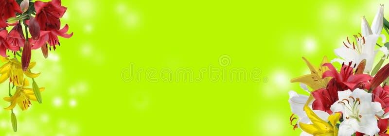 Άσπρος, κόκκινος και κίτρινος κρίνος στο πράσινο υπόβαθρο στοκ φωτογραφίες με δικαίωμα ελεύθερης χρήσης
