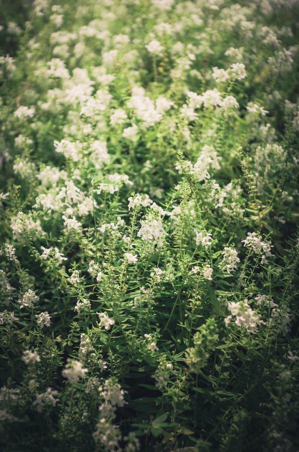 Άσπρος τρύγος λουλουδιών στοκ φωτογραφίες με δικαίωμα ελεύθερης χρήσης