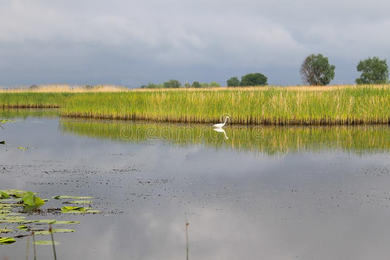 Άσπρος τσικνιάς στον ποταμό στοκ φωτογραφίες με δικαίωμα ελεύθερης χρήσης