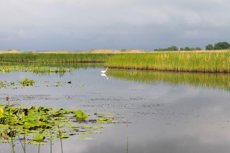 Άσπρος τσικνιάς στον ποταμό στοκ φωτογραφία με δικαίωμα ελεύθερης χρήσης