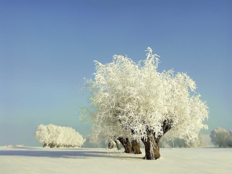 άσπρος χειμώνας ιτιών τοπίου πεδίων στοκ εικόνες