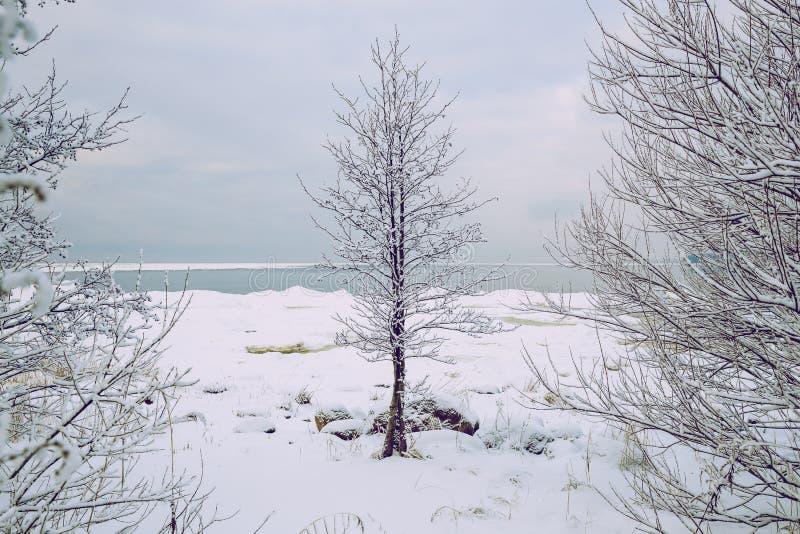 Άσπρος χειμώνας, ομίχλη και δέντρα Σιωπηλό και ηλιόλουστο πρωί στοκ εικόνες