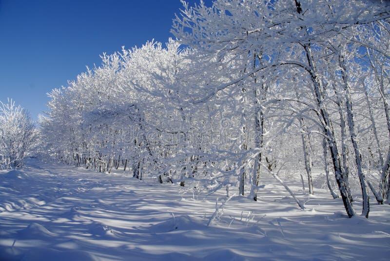 Download άσπρος χειμώνας τοπίων στοκ εικόνες. εικόνα από άσπρος - 17053036