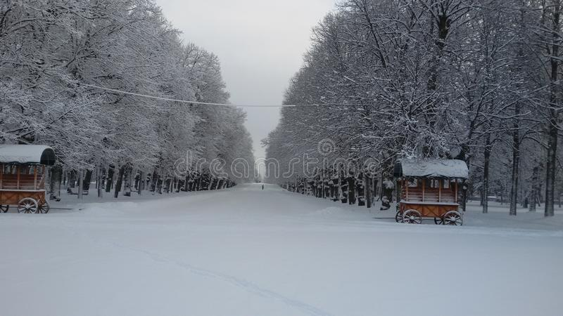 άσπρος χειμώνας στοκ φωτογραφία με δικαίωμα ελεύθερης χρήσης
