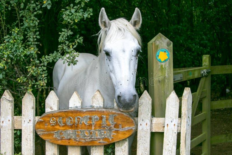 Άσπρο άλογο σε μια πύλη στοκ φωτογραφία
