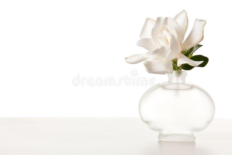 Άσπρο άνθος Gardenia στο μαρμάρινο πίνακα στοκ εικόνα