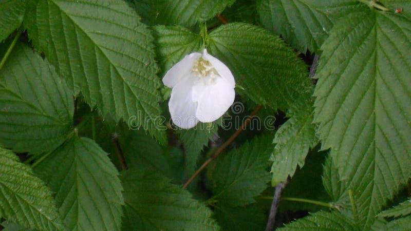 Άσπρο δάσος λουλουδιών στοκ φωτογραφίες με δικαίωμα ελεύθερης χρήσης