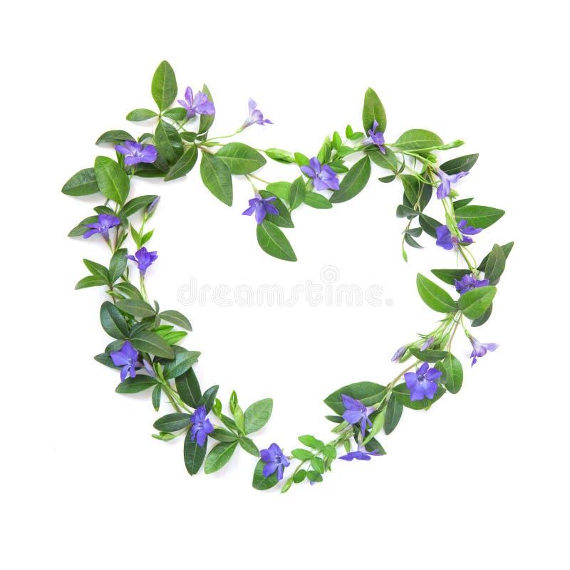 Άσπρο απομονωμένο υπόβαθρο Η μορφή της καρδιάς των λουλουδιών και των φύλλων της βίγκας Θερινή διάθεση στοκ εικόνες