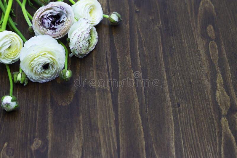Άσπρο βατράχιο στο ξύλινο διάστημα υποβάθρου για το κείμενο στοκ φωτογραφία με δικαίωμα ελεύθερης χρήσης