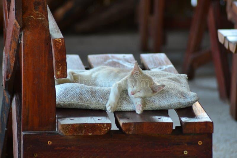 άσπρο γατάκι που ονειρεύεται ειρηνικά στοκ φωτογραφία με δικαίωμα ελεύθερης χρήσης