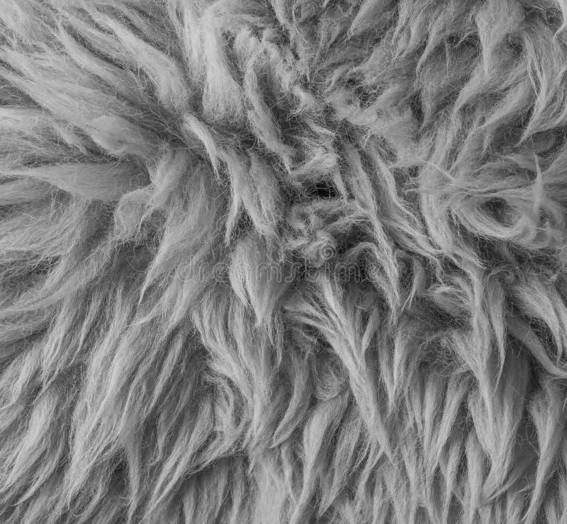 Άσπρο γκρίζο μαλακό τριχωτό ζωικό υπόβαθρο σύστασης κινηματογραφήσεων σε πρώτο πλάνο γουνών αναδρομικό μακρο στοκ φωτογραφία