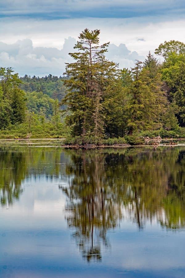 Άσπρο δέντρο Refected πεύκων στα ήρεμα νερά στοκ φωτογραφία με δικαίωμα ελεύθερης χρήσης