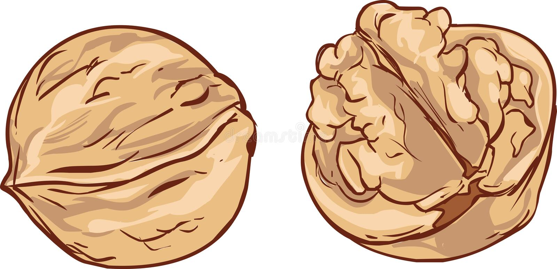 Άσπρο διάνυσμα κινούμενων σχεδίων ξύλων καρυδιάς υποβάθρου συρμένο χέρι ελεύθερη απεικόνιση δικαιώματος