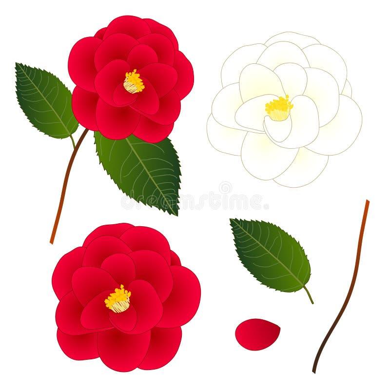 Άσπρο και κόκκινο λουλούδι καμελιών η ανασκόπηση απομόνωσε το λευκό επίσης corel σύρετε το διάνυσμα απεικόνισης απεικόνιση αποθεμάτων