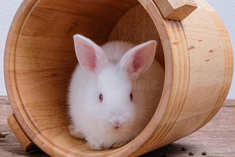 Άσπρο κουνέλι σε έναν ξύλινο κάδο στοκ φωτογραφία με δικαίωμα ελεύθερης χρήσης
