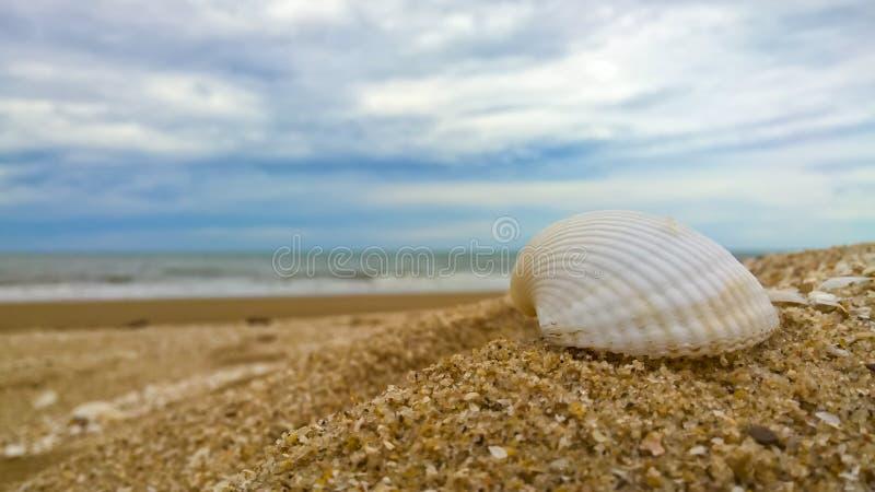 Άσπρο κοχύλι στην παραλία με το υπόβαθρο μπλε ουρανού στοκ εικόνες με δικαίωμα ελεύθερης χρήσης