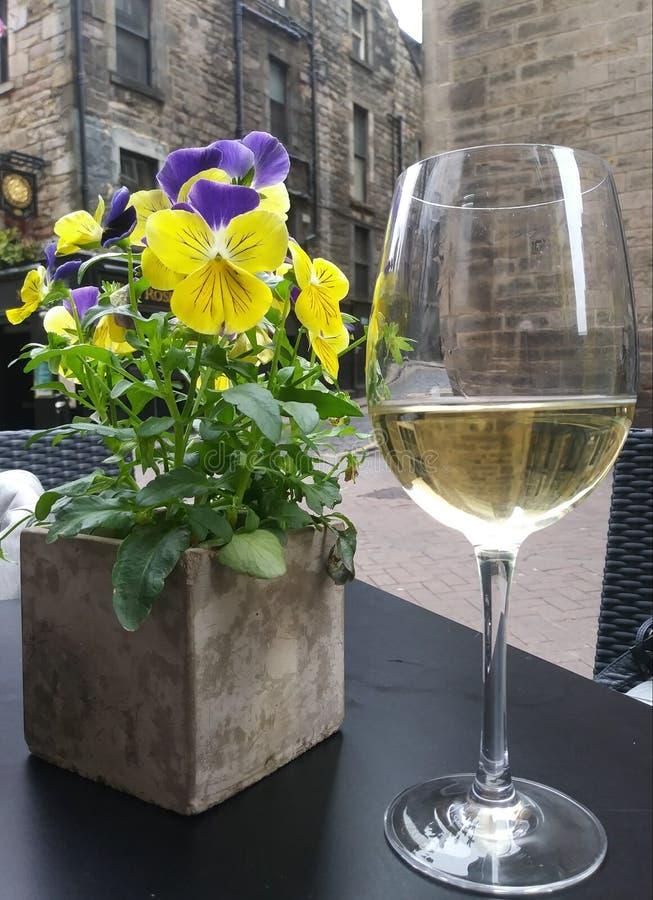 άσπρο κρασί λουλουδιών στοκ εικόνες με δικαίωμα ελεύθερης χρήσης