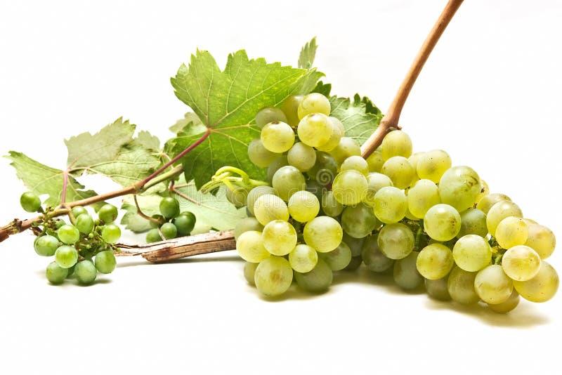 Download άσπρο κρασί σταφυλιών στοκ εικόνα. εικόνα από δέσμη, άμπελος - 13188121