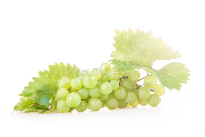 άσπρο κρασί στοκ φωτογραφίες
