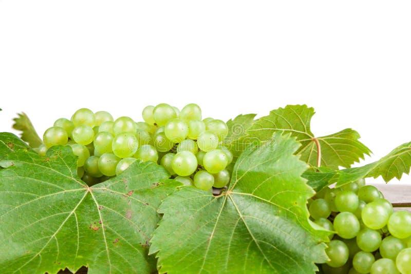 άσπρο κρασί στοκ φωτογραφία με δικαίωμα ελεύθερης χρήσης