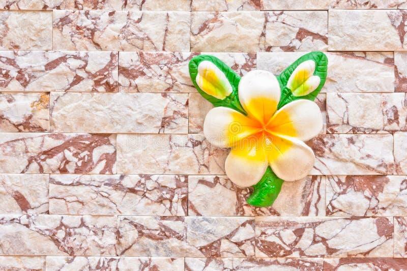 Άσπρο λουλούδι σε έναν τουβλότοιχο στοκ εικόνες