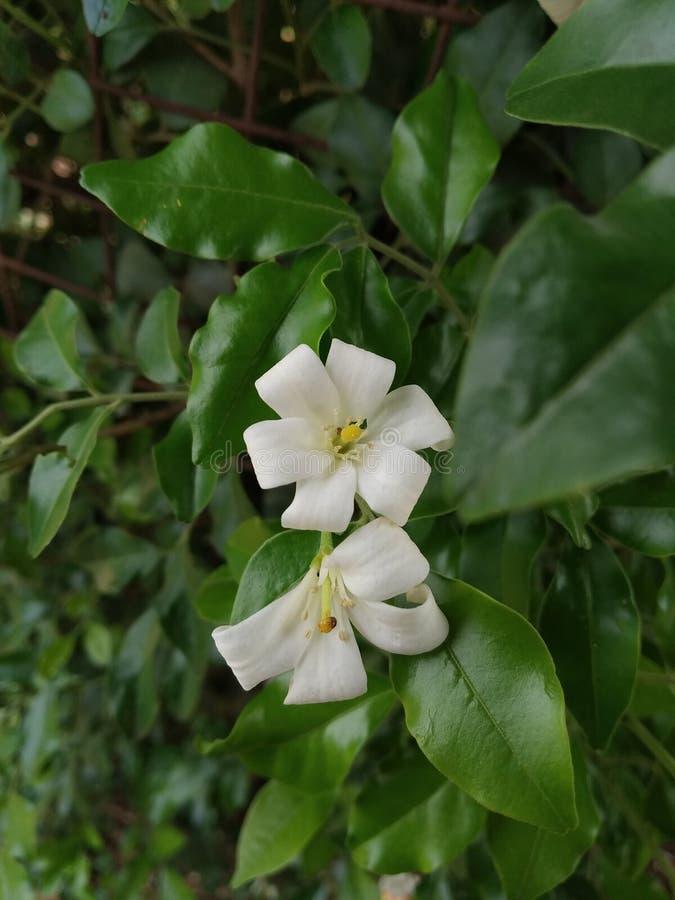 Άσπρο λουλούδι στο πάρκο στοκ φωτογραφίες με δικαίωμα ελεύθερης χρήσης