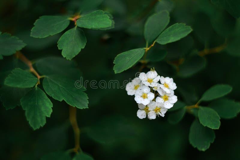 Άσπρο λουλούδι στο πυκνό φύλλωμα Το σύμβολο της ελπίδας Το σύμβολο των λαμπρών ιδεών στοκ εικόνα