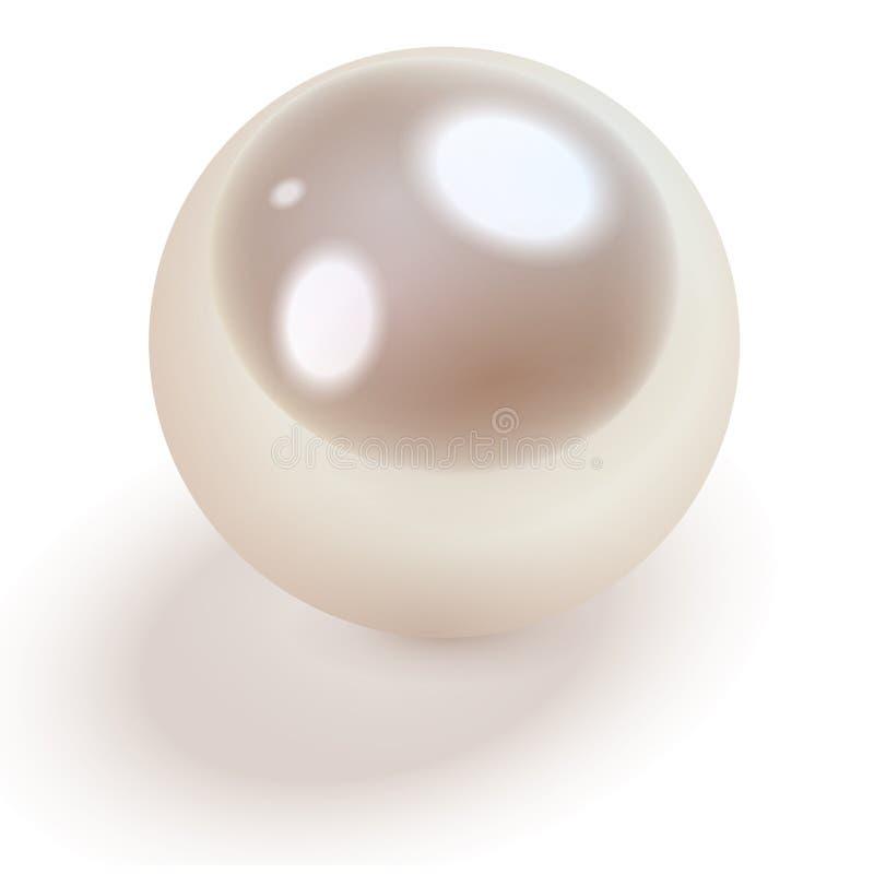 Άσπρο μαργαριτάρι διανυσματική απεικόνιση