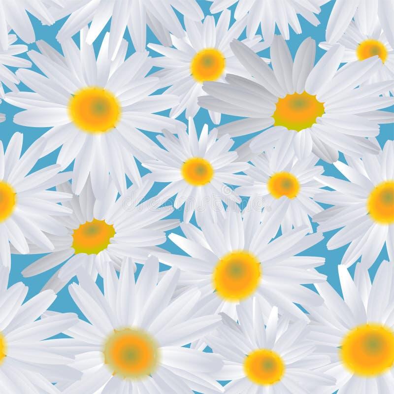 Άσπρο λουλούδι μαργαριτών στο μπλε Άνευ ραφής ανασκόπηση απεικόνιση αποθεμάτων