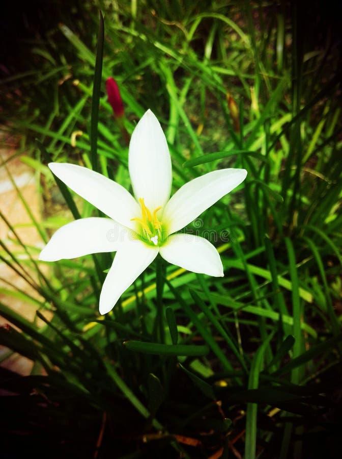 Άσπρο λουλούδι στον κήπο στοκ φωτογραφία με δικαίωμα ελεύθερης χρήσης