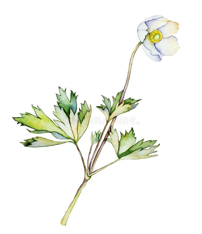 Άσπρο λουλούδι διανυσματική απεικόνιση