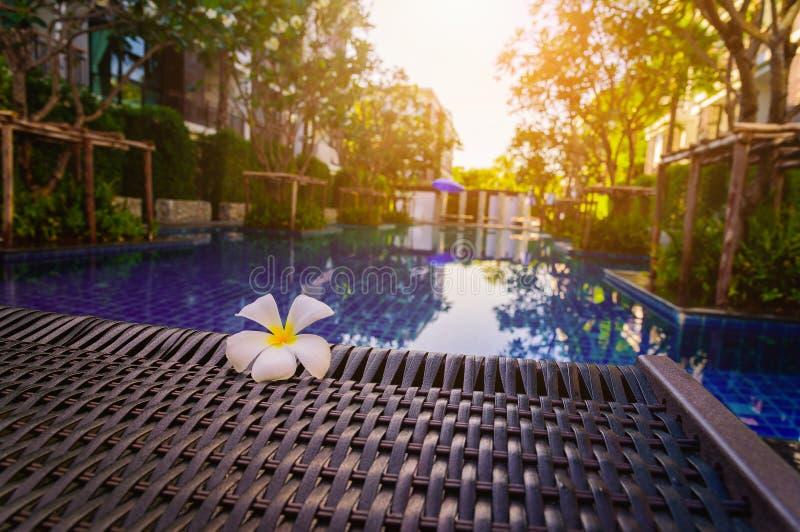 Άσπρο λουλούδι Frangipani στην καρέκλα στοκ εικόνα με δικαίωμα ελεύθερης χρήσης