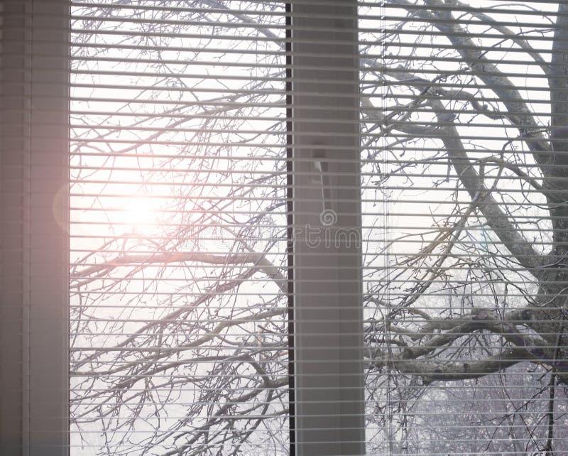 άσπρο παράθυρο Ανοικτοί τυφλοί jalousie στοκ εικόνες