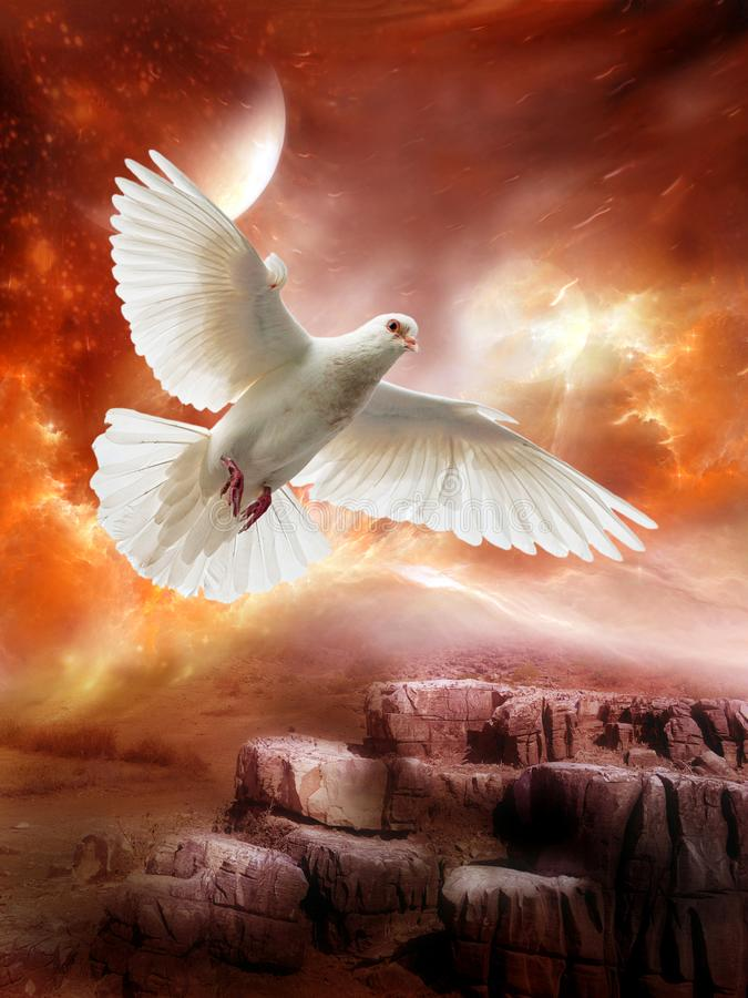 Άσπρο περιστέρι, ειρήνη, ελπίδα, αγάπη, αλλοδαπός πλανήτης στοκ εικόνες με δικαίωμα ελεύθερης χρήσης
