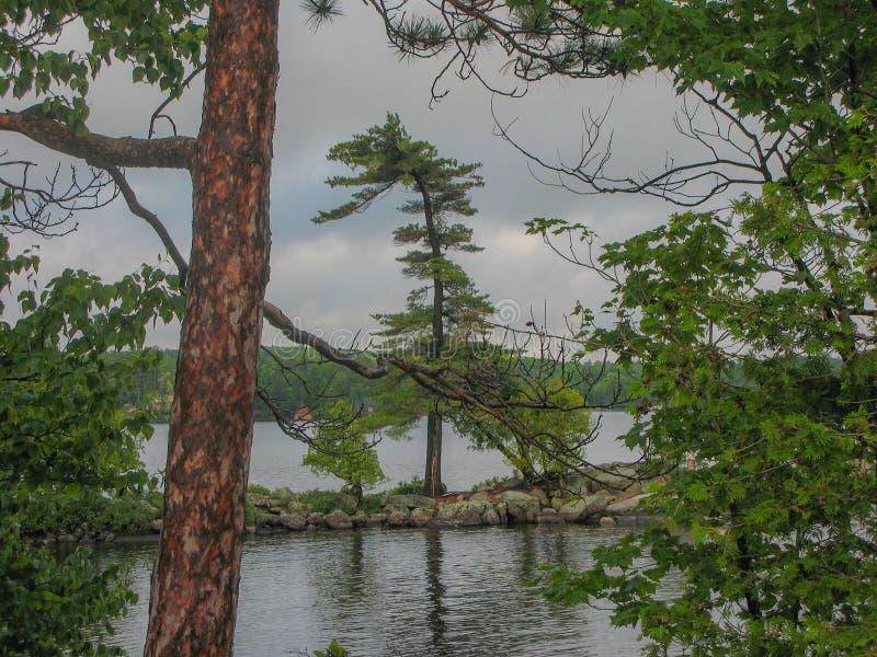 Άσπρο πεύκο στη λίμνη Muskoka στοκ εικόνες