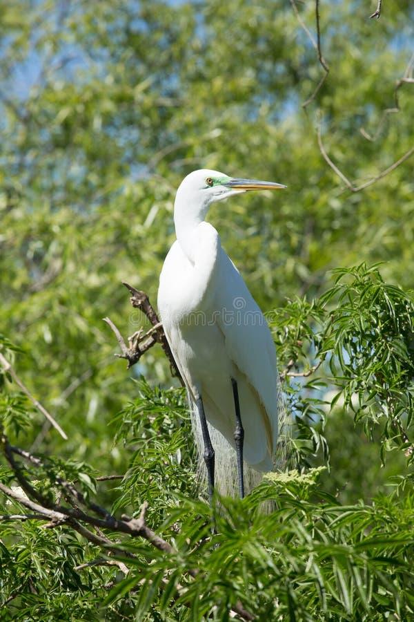 Άσπρο πουλί σε ένα δέντρο κοντά στο νερό στοκ φωτογραφίες με δικαίωμα ελεύθερης χρήσης