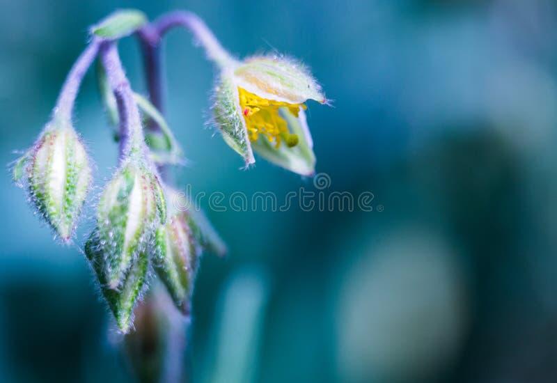 Άσπρο πράσινο λουλούδι στο μπλε υπόβαθρο στοκ εικόνες με δικαίωμα ελεύθερης χρήσης