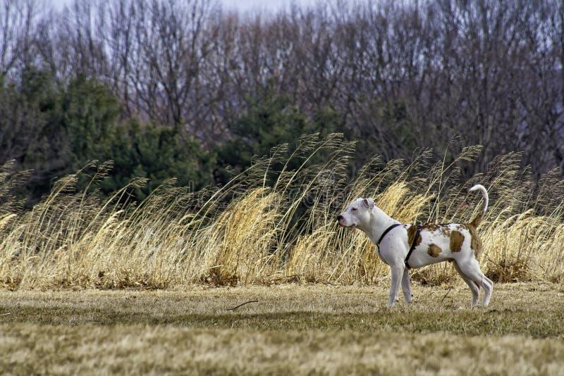 Άσπρο σκυλί κοντά στη χλόη σίτου στοκ φωτογραφίες